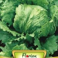 Salata GREAT LAKES - 3 gr - Seminte de Salata tip AISBERG, de la Florian