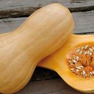 Seminte dovleac Matilda F1 (500 seminte), fructe in forma de para ce prezinta un raport foarte bun intre vigoare si productie adaptandu-se si la conditii de clima rece, Enza Zaden