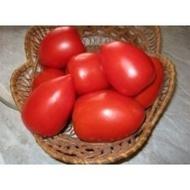 Seminte rosii Chelse F1 (1000 seminte), pentru industrializare, Seminis