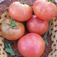Seminte tomate Ideal Roz (0.5 gr), Rozov Ideal, soi nedeterminate semitimpurii, Opal