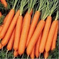 Tito-100 gr.-seminte de morcovi de tip Nantes cu diam. mare,adaptat pentru soluri grele de la Hazera
