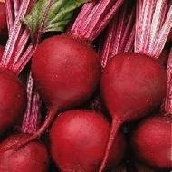 Bohan F1 - 10.000 sem - Seminte de sfecla rosie pentru depozitare foarte lunga de culoare rosie atragatoare fara inele de la Bejo