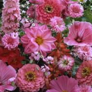 Amestec flori anuale roz (0,5 g), seminte de flori anuale roz, Agrosem