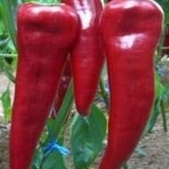 Armageddon F1 - 500 sem - Seminte de ardei capia cu productivitate mare cu fruct carnos de culoare rosu inchis si are o lungime cuprinsa intre 22-24 cm de la Yuksel