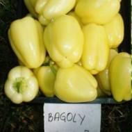 Bagoly F1 - 1000 sem - Seminte de ardei gras tip Blocky cu fructe usor alungite pulpa deosebit de carnoasa cantarind aproximativ 150-190 de grame de la Duna-R