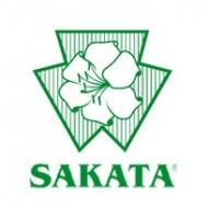 Bandai F1 - 500 sem - Seminte de ardei gras rosu de la Sakata
