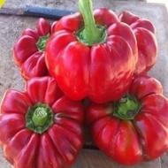 Bucur Ardei Gogosar Gigant (100 gr), seminte ardei gogosar soi romanesc, 4 Agro