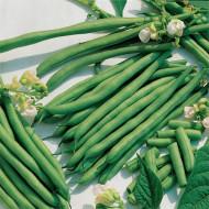Canellino (100 gr) seminte de fasole pitica cu bob alb, Agrosem