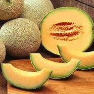 Cantalupo - 2 gr - Seminte Pepene Galben Soi Timpuriu Forma Rotunda