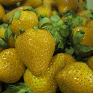 Capsuni galbene (0,3 grame), seminte de capsuni Laktofol