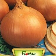 Ceapa AURUL BOLONIEI (2 gr) Seminte de Ceapa Soi semitimpuriu Florian Bulgaria