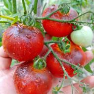 Cherry Bing Wing (40 seminte) rosii cherry negre culoarea rosie cu pete indigo pana la negru, Ukraina