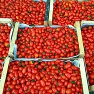 Cherry Mila (1000 seminte) Tomate Cherry in forma de prunisoare crestere nedeterminata, Geosem Bulgaria