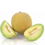 Exelor F1 - 1000 sem - Seminte de pepene galben tip Galia foarte productiv remarcabil prin uniformitate si savoarea pulpei rezistent la transport si ofera producatorilor 100% fructe calitatea 1 de la Sakata