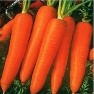 Flam-100 gr.- seminte de morcovi tip Flakee cu radacini de24 cm,rezistent la crapare de la Hazera
