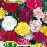 Garoafa CHABAUD - Seminte Flori Garoafa CHABAUD de la Florian