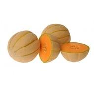 Halona F1 - 1000 sem - Seminte de pepene galben cu pulpa crocanta dulce de culoare portocaliu inchis avand o forma rotund-globulara si neteda de la Hollar Seeds