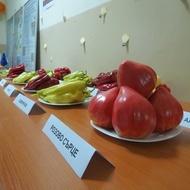 Inima Roz (0.2 gr) Seminte tomate nedeterminate semitimpurii Soi rosii Mari