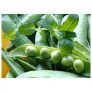 Kelvedon Wonder (1 kg) seminte de mazare de gradina, soi timpuriu, Agrosem