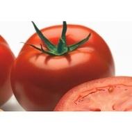 Logure F1 - 100 sem - Seminte de tomate cu fructe putin aplatizate si un invelis de culoare rosu aprins foarte gustoase si suculente de la Rijk Zwaan