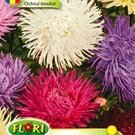 Ochiul Boului Mix Regal - Seminte Flori Ochiul Boului de la Florian