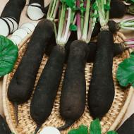 Ridichi de iarna Black Spanish Long (500 seminte), ridichi de iarna soi tardiv, radacini mari, alungite, Agrosem