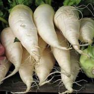 Ridichi Munchen Bier (1 kg), seminte de ridichi albe de vara, radacina semi-lunga, ingrosata la partea superioara, Agrosem