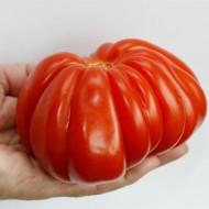 Seminte rosii Rugantino F1 RZ (100 seminte), nedeterminate tip inima de bou, Rijk Zwaan