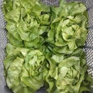 Seminte salata Orelian (5000 seminte), timpurie, Syngenta
