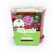 Set de cultivare Flori - Verbena Nana mixt, Colectia City Garden