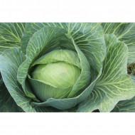 Varza Buzoiana (de Buzau) 0.4 gr seminte varza de toamna, Agrosem