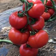 Vitara F1 (100 seminte) seminte de rosii nedeterminate timpurii, Fito Semillas