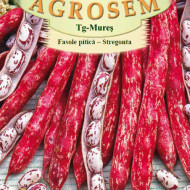 Stregonta (100 grame) fasole pitica pentru boabe, culoare tarcata, soi romanesc, Agrosem