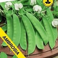 Ambrosia - 100 gr - Seminte de Mazare Dulce Ambrosia de la Florian