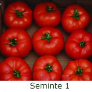 Berberana F1 (20 seminte) de rosii nedeterminate cu fructe uniforme rotund-aplatizate ferme, Enza Zaden