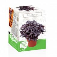 Busuioc rosu - Kit plante aromatice