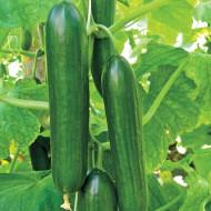 Castraveti Beta Alpha (60 seminte), castraveti semilungi, gustosi, crocanti, Agrosem