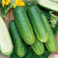 Castraveti Libelle F1 (2 g), soi semitimpuriu cu fructe mici, verzi, crocante, Agrosem
