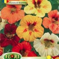 Condurul Doamnei 2 - Seminte Flori Condurul Doamnei de la Florian