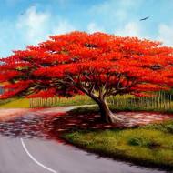 Copac flacara (Arbore de Foc) Delonix regia seminte de arbore exotic, Vilmorin