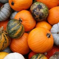 Dovleac decorativ amestec cu fructe mari (2 g), seminte de dovleac decorativ cu fructe mari, in diferite combinatii de forme si culori, Kertimag