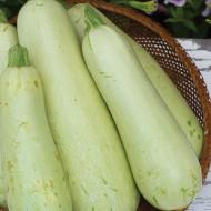 Dovlecel Greta F1 (3.000 seminte), seminte de hibrid timpuriu zucchini alb fara vrej, Agrosem