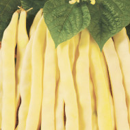 Eureka (50 gr) seminte de fasole pitica cu bob alb, Agrosem