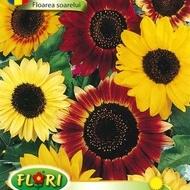Floarea Soarelui Mix Decor - Seminte Flori Floarea Soarelui Mix de la Florian