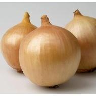 Franzisco-250.000 sem.- seminte de ceapa semitimpurie,viguroasa,productie buna cu bulbi mari de la Hazera