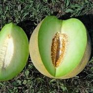 Gina F1-500 sem-seminte pepene galben tip Galia de la Hazera
