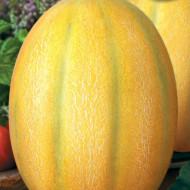 Gladiator F1 (25 seminte) pepene galben tip feliat bulgaresc semi-timpuriu, fruct 3,5 - 4 kg, Florian Bulgaria