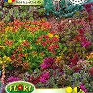 Iarba de soaldina MIX - Seminte Flori Iarba de Soaldina MIX de la Florian