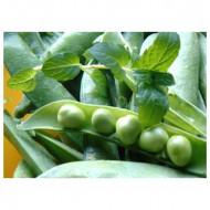 Kelvedon Wonder (25 kg) seminte de mazare de gradina, soi timpuriu, Agrosem