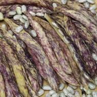 Meraviglia del Piemonte (50 grame) seminte de fasole pitica lata, tarcata cu striatiuni mov, Agrosem